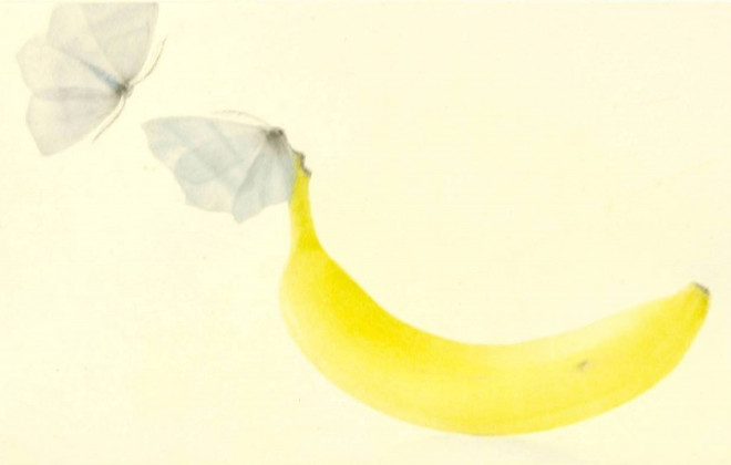 Mikio Watanabe - Une banane